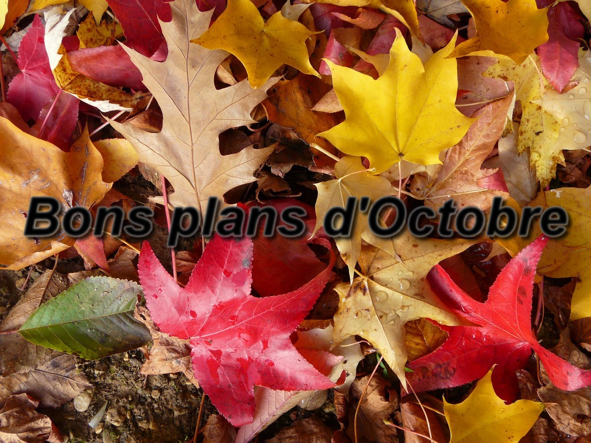 Les Bons Plans D'octobre